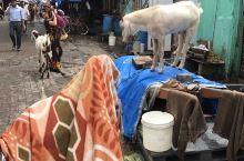 印度的贫民窟并不危险