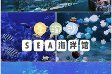 新加坡必打卡|圣淘沙里的SEA海洋馆