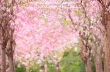 广州游|一片红|春天万物复苏的模样!