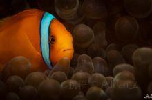 每人都喜欢的小丑鱼,还有一个惊天秘密