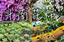 昆明|斗南花市|花的海洋