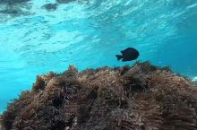 【小众秘境】皮皮岛浮潜深度2日游—1