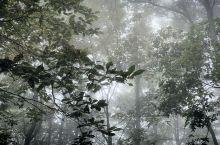 雾里九华山