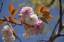 春暖花开,鸟语花香!