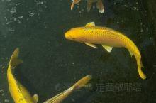 五彩斑斓的鱼