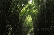 林间小路,曲径通幽