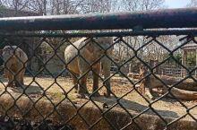 上海动物园一日游 动物园里有很多可爱的小动物,还有小型的游乐场,里面食物价格适中!不错的选择!
