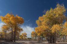 胡杨林的千年等待,只为绽放整个秋天