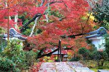 神藏寺绝美秋色