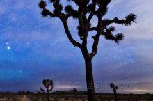 洛杉矶附近树底下观星赏月旅游攻略