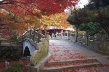 庐山枫叶红了