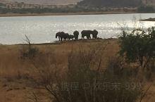 干燥的非洲大地难得的水源地,象群聚集在湖畔饮水。