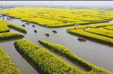 国内最大的油菜花海,兴化千垛水上油菜花
