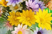 美美的花,跟天气一样