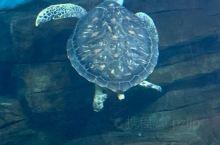 好玩的海龟