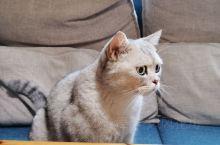喜欢安于一隅咖啡厅,因喜欢就来了,有只大猫,很大很乖,抓不住,但喜欢围着你的脚蹭你,喜欢就来,不喜欢