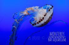 蒙特利湾水族馆-沙丁鱼罐头厂改建的水世界