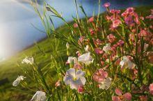 绿江村的路边花