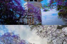 你见过紫色的王国吗  5月的尼泊尔蓝花楹都开了  从来没见过紫色的花也可以开得这么惊为天人  让人心