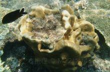 热浪岛的浮潜