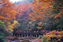 秋色迷人的十八月潭