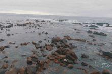 绵延的海岸、 无尽的沙滩、 随处可见的野生萌宠、 袋鼠岛更多精彩等你。 袋鼠岛·南澳大利亚