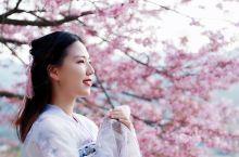 福建樱花||大陆阿里山,藏着中国最美樱花