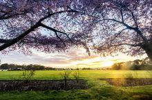 北帕默斯顿城市公园春色