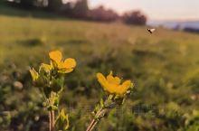 花儿与虫儿