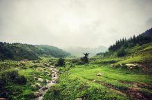 徒驴第一站:驼梁山(五台山驼梁风景区) 7月,忻州驼梁山段的金莲花漫山遍野次第开放。又一次收拾行囊,
