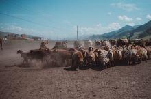 新疆」新疆绝美小众草原 百里画廊—唐布拉