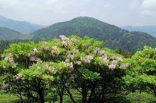 最美不过人间四月天 天台山大瀑布