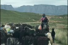 牛羊转场。  牧草生长季节差别,根据气候、地形和牧草生长情况划分一年四季的牧区、不同的季节在不同的牧