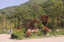 位于牛背梁景区附近的阳坡院子,院子不是很大,也就还有几个小独院,但环境真的很好,绿化不错,尤其是坐在