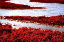 中国最美沼泽湿地·辽宁盘锦红海滩 