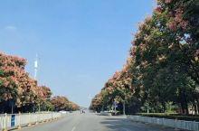 秋意渐浓 栾树风姿绰约,南京秋意正浓。 赶脚路不平有点儿颠,让人想起不能忘却的纪念。