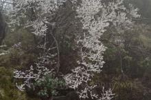 峨眉山,雪花雾凇