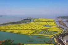 江苏扬州发现一个网红油菜花海,不输兴化油菜花,你知道在哪儿吗