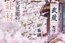 关西深度游赏樱秘境·日本最美丽乡村新庄村