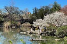 美国纽约的中央公园