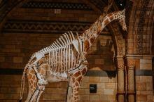 伦敦   拍拍拍不够的英国自然历史博物馆
