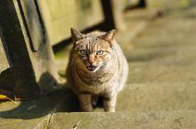 西山风景区楼梯上的小猫