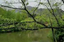 莫干山美景