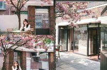 韩国樱花季一定要去的咖啡店