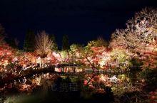 日本京都赏枫~~永覌堂的夜枫