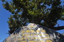 河北小西藏藏着千年板栗王,翻山越岭去探访