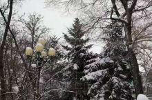 观      雪