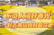 黄山柯村,这里有皖南最大的油菜花基地!