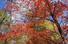 吉林蛟河红叶谷