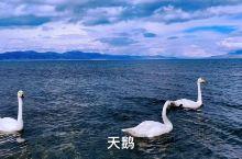 天鹅湖吗……赛里木湖